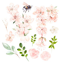 Beautiful Watercolor Set With ...