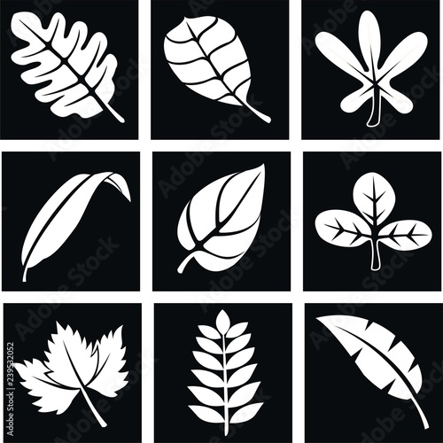 Fototapety, obrazy: set of white leaves on black background. white leaves for decoration