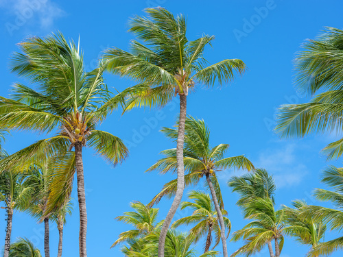 Beautiful palms against blue sky