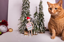 Christmas Holiday Scene With Orange Tabby And Manikin Holding Merry Christmas Sign Christmas Crossed Out To Say Merry CATmas