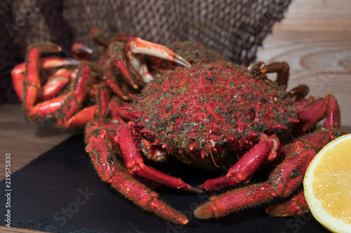 galician crab from the estuary, wild fresh seafood