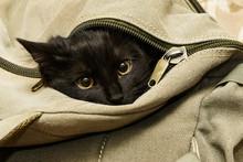 Black Cat In Backpack