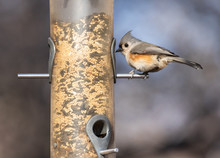 Tufted Titmouse At Bird Feeder...