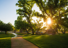Giant Cottonwood Trees With Path Through Park At Sunset