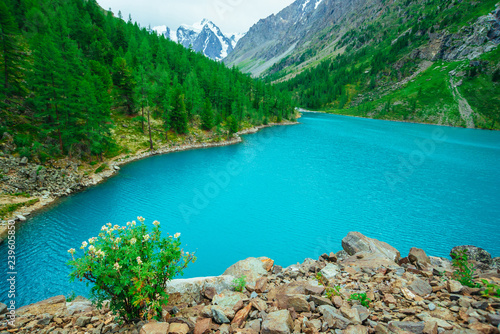 Printed kitchen splashbacks Khaki Green bush on stony hill on background of glacier and mountain lake. Coniferous forest on mountainside. Rich vegetation of highlands. Mountainous flora. Amazing vivid landscape of majestic nature.