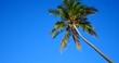 miamibeach palms5