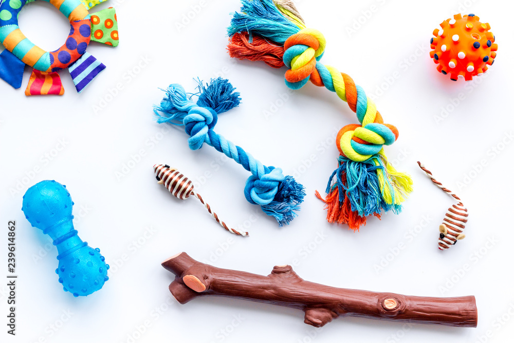 Pet accessories for care and training. Toys on white background top view