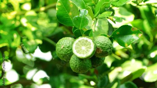 Photo  Bergamot fruit