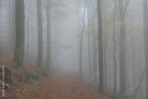Cadres-photo bureau Foret brouillard Nebel im Wald