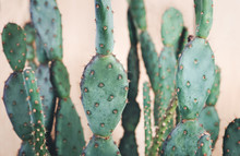 Closeup Of Cactus Braches, Shallow Focus