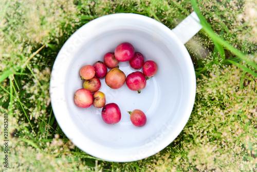 Fotografía  Coffee bean in cup