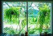 Landscape view from the window for relaxing time, green nature beside the window, coffee bar, peaceful place for take a rest in the morning, Flare light through the window in the morning