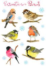 Design Set With Winter Birds B...