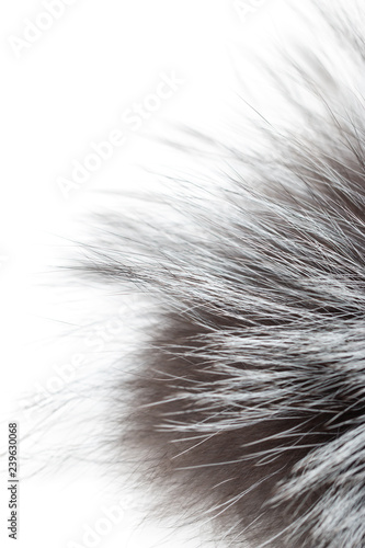 Foto-Fahne - black and gray fur on a white background (von studybos)