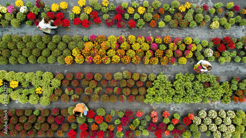 Flower field from above Fototapet