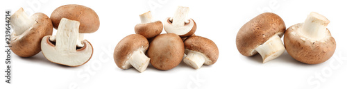 Fotografija Fresh champignon mushrooms isolated on white background