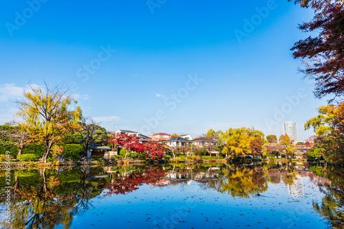Valokuva  秋の石神井公園 Fall of Shakujii Park