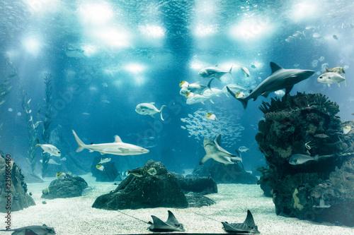 Obraz na dibondzie (fotoboard) akwarium