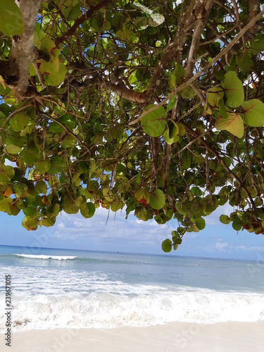 Foto op Canvas Olijfboom Caribbean beach