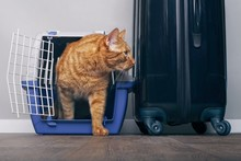 Ginger Cat In A Travel Crate Beside A Suitcase Look Anxiously Sideways.
