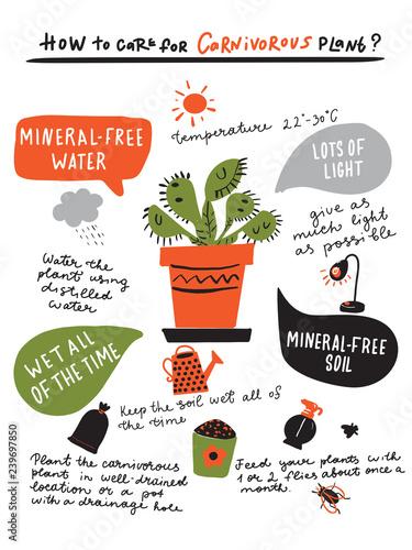 Fotografie, Obraz  How to grow carnivorous plant