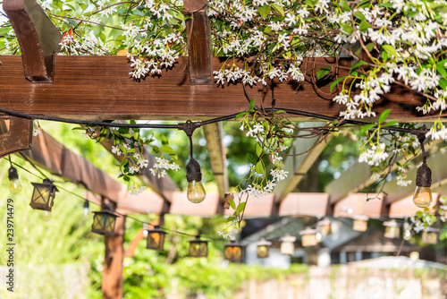 Closeup of patio outdoor spring white flower garden in backyard porch of home, l Fototapeta