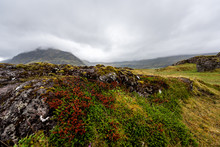 Lava Field In Iceland Closeup ...