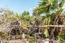 Big Pine Key, USA Florida Keys...