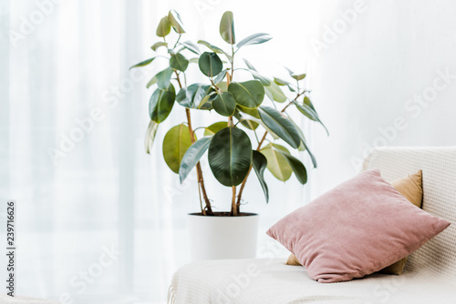green plant in pot near couch with pillows