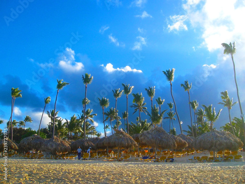 Tall exotic palm tree on one of the Caribbean beaches, Caribbean Island
