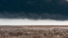 The Fog Rising From Pitt-Addin...