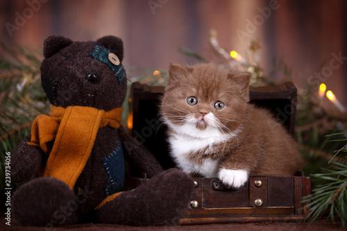 Teddy Weihnachten.Katzenbaby Kitten Mit Teddy In Schatztruhe Weihnachten Buy This