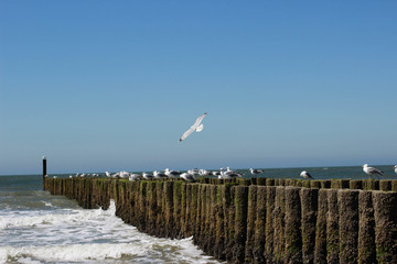 Möwe über der Küste fliegend