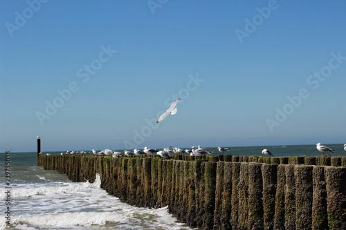 In de dag Noordzee Möwe über der Küste fliegend