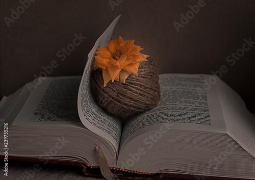 Fotografie, Obraz  Libro abierto con una flor
