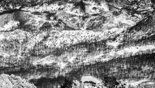 Abstract Winter Landscape In Black And White