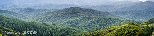 Panoramic view of the hills and canyons covered in evergreen trees on a foggy day, Santa Cruz mountains, San Francisco bay area, California - 239767619