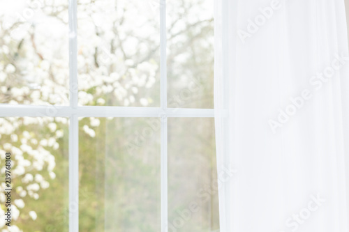 Closeup of modern white lace curtains with view through glass window on garden in spring or summer with sakura, cherry blossom flowers tree