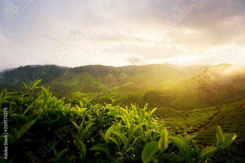 Stampa su Tela Amazing Malaysia landscape