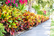 Leinwanddruck Bild - Vibrant codiaeum variegatum, petra croton, variegated plant leaf, leaves, landscaped garden, landscaping wall, outside, outdoor street, green grass, road, street sidewalk in tropical Florida keys