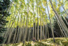 Woman Hiking In Forest Surrounded By Tall Trees In Nature
