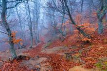 Fantastic Gloomy Landscape - Trees On The Hillside In Autumn Foggy Day