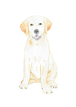 Watercolor Illustration. Labrador Retriever Puppy. Hand Painting. Isolated On White Background.