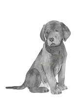 Watercolor Illustration. Black Labrador Retriever Puppy. Hand Painting. Isolated On White Background.