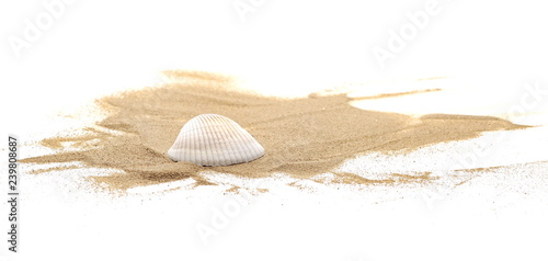 Seashell in sand pile isolated on white background