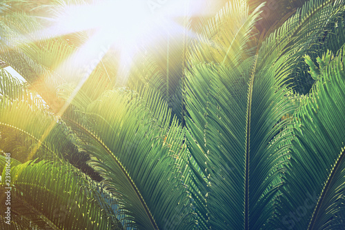 Palm Leaves Close Up In Sunshine Palm Trees At Tropical Coast In Summer Beautiful Texture Vintage Retro Toned And Stylized Image Buy This Stock Photo And Explore Similar Images At Adobe Fronds measure anywhere from 12 up to 24 in length and about 2.5 to 3 wide. adobe stock