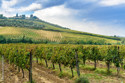 Vineyard in Chianti region in province of Siena. Tuscany. Italy Canvas