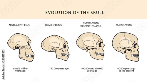 Human Evolution Of The Skull And Text With Dating Wallpaper Mural