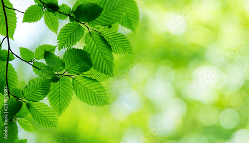 mata magnetyczna green leaves background in sunny day