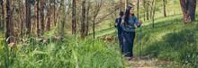 Couple Of Hikers Doing Trekking With Trekking Poles Outdoors